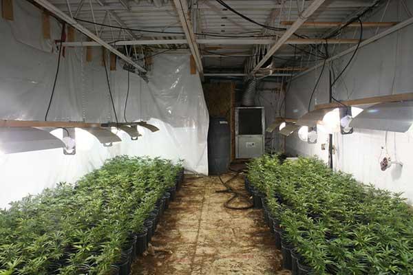 Plantation de cannabis au sous-sol nécessite une décontamination