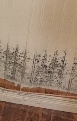 Moisissure Coin De Mur décontamination de moisissures
